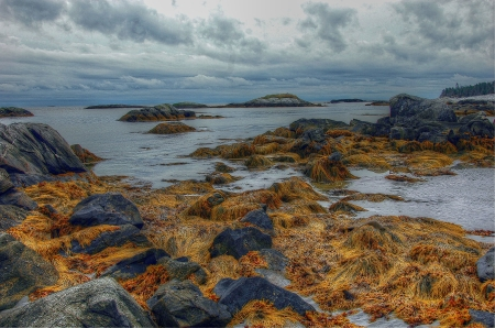 Seaweed and rocks, Kejimkujik National Seashore, NS