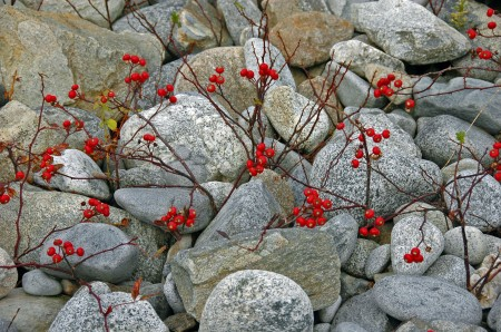 Color amidst the rocks, Kejimkujik National Seashore, NS
