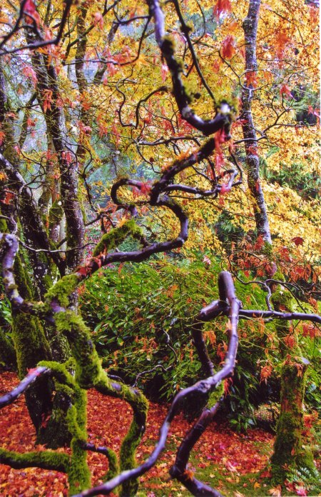 Butchart Gardens -- Moss and Branches