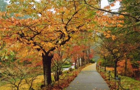 Butchart Gardens -- Walkway