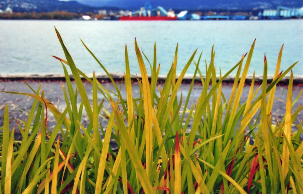 Blades of Grass, Stanley Park