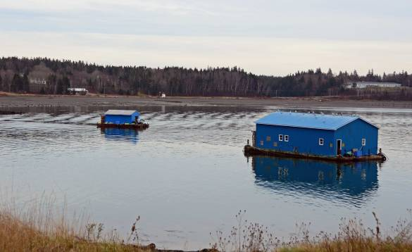 Floating Cottages, Campobello Island, N.B.