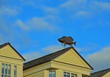 Fish Weather Vane, St. Andrews By the Sea, N.B.