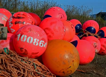Buoys and Floats, Delaps Cove, N.S.