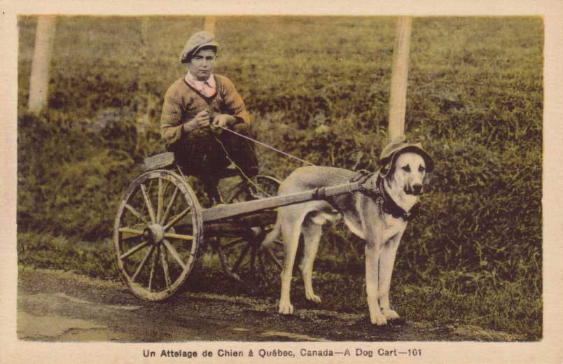 Rural----Dog-Cart