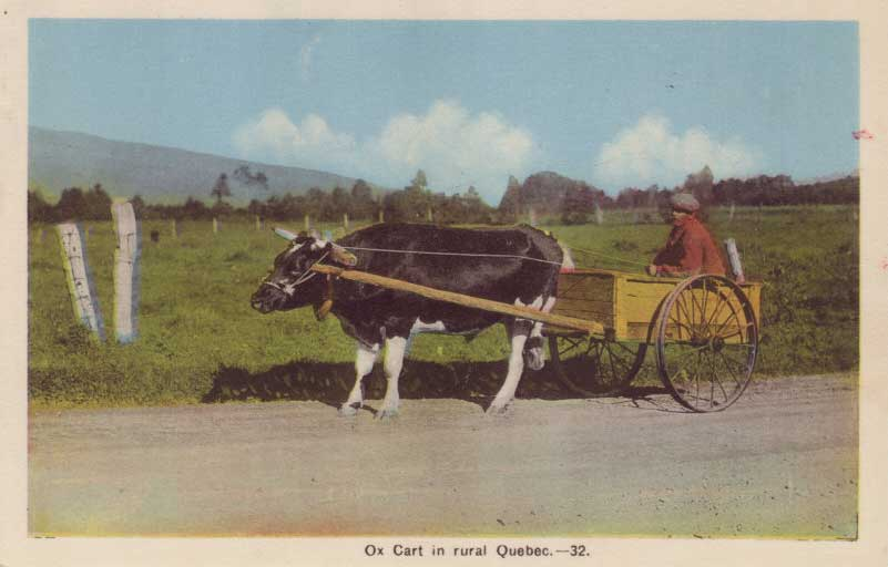 Rural----Ox-Cart-1