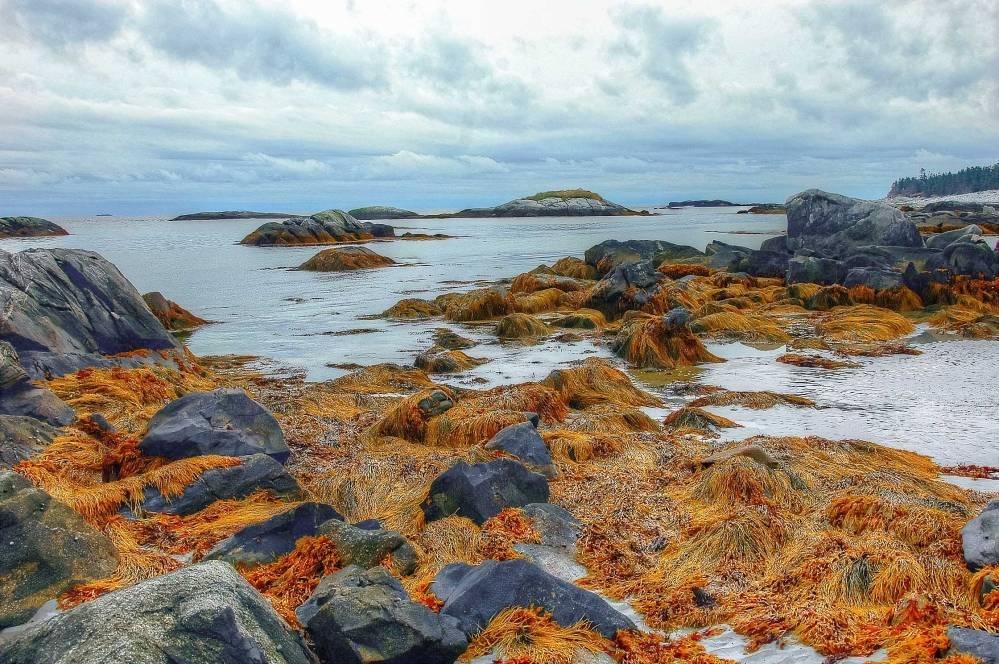 aNova-Scotia-2011083