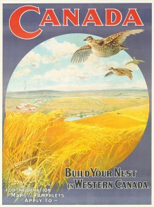 Build Your Nest