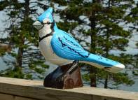 Contented Bluejay, by David Taylor