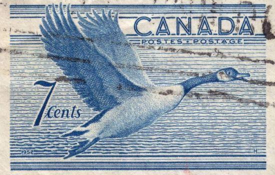 Canada Goose Stamp