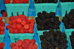 Fresh Berries, St. John Market, New Brunswick