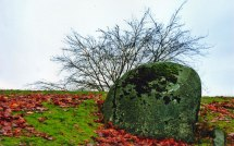 Hillside and Lichen-Covered Boulder, Stanley Park, Vancouver