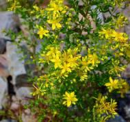 Wildflowers, Black Rock, N.S.